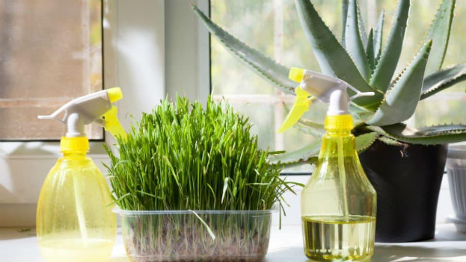Pflanzen: Ein einfaches Mittel für etwas mehr Feuchtigkeit.