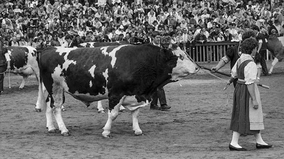 Viehschau in der Arena der 44. OLMA 1986 in St. Gallen.