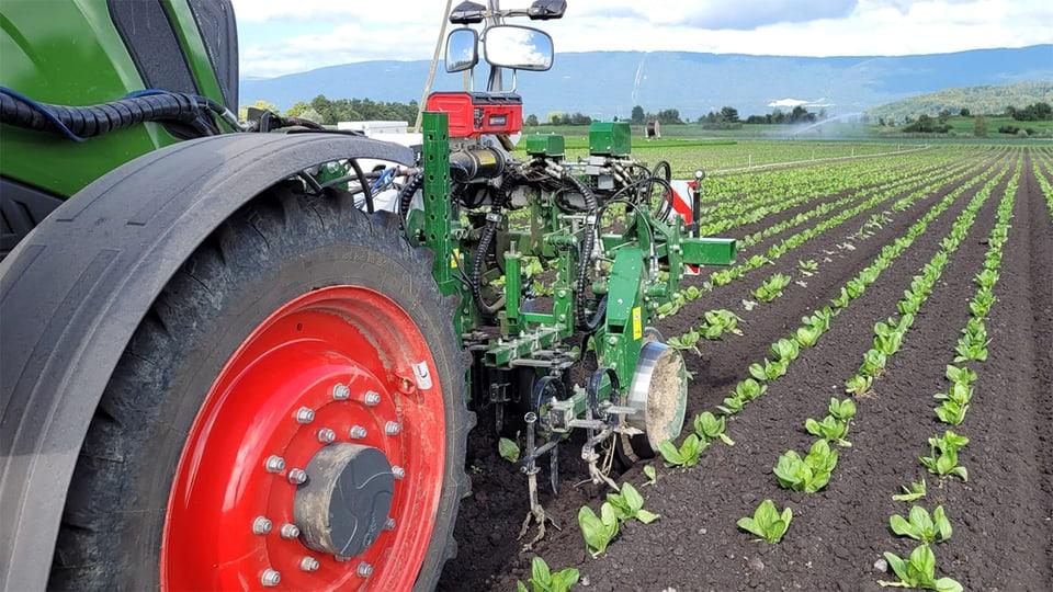 Der Jät-Roboter kann mittels Farberkennung Gemüse von Unkraut unterscheiden.