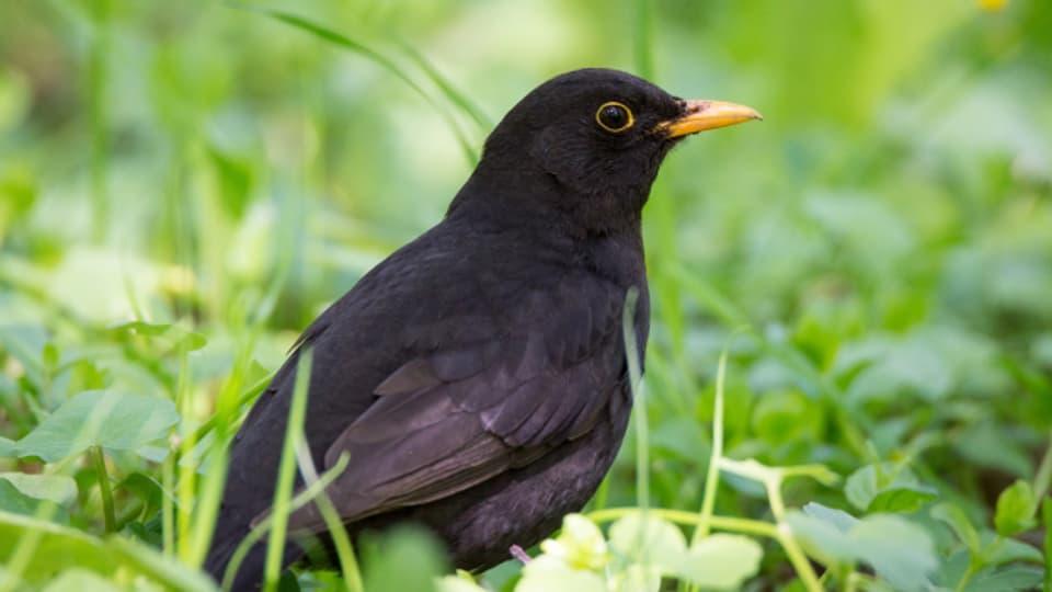 Es gibt unzählige Volksmusiklieder rund um Vögel.