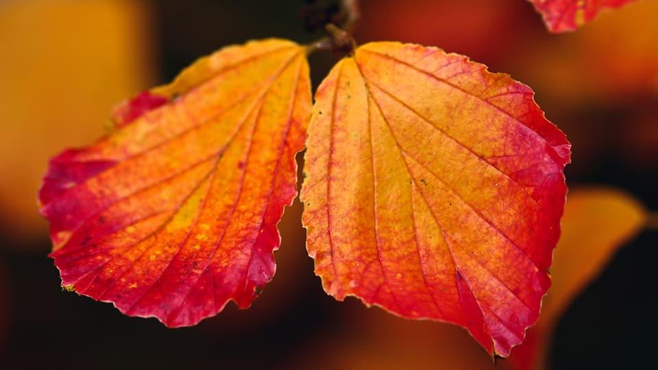 Der Herbst ist die Zeit der warmen Farben.