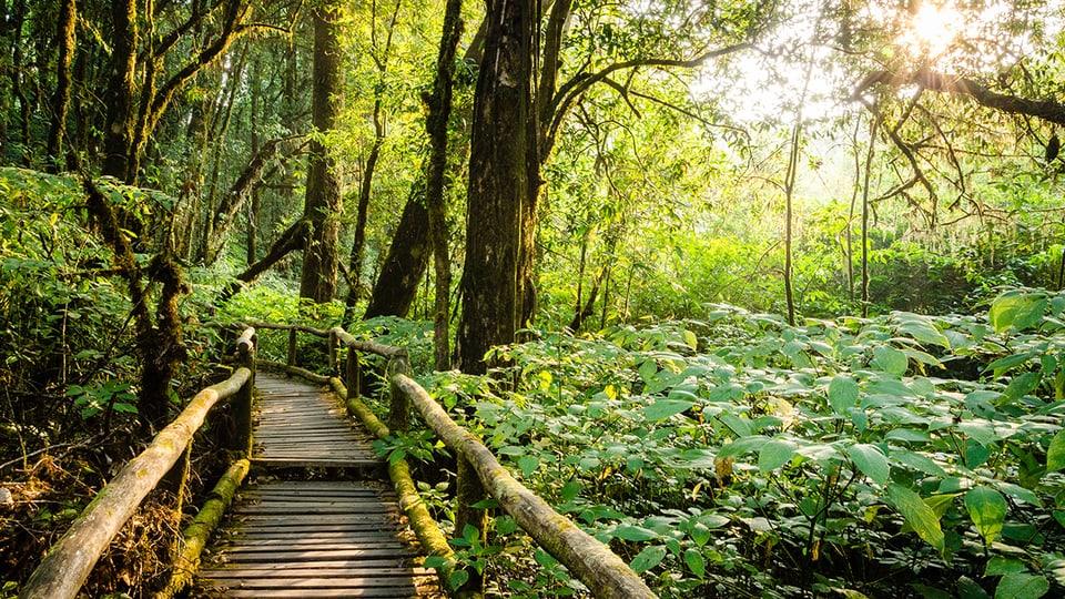 «Waldlust» heisst ein Lied von Friedrich Silcher.
