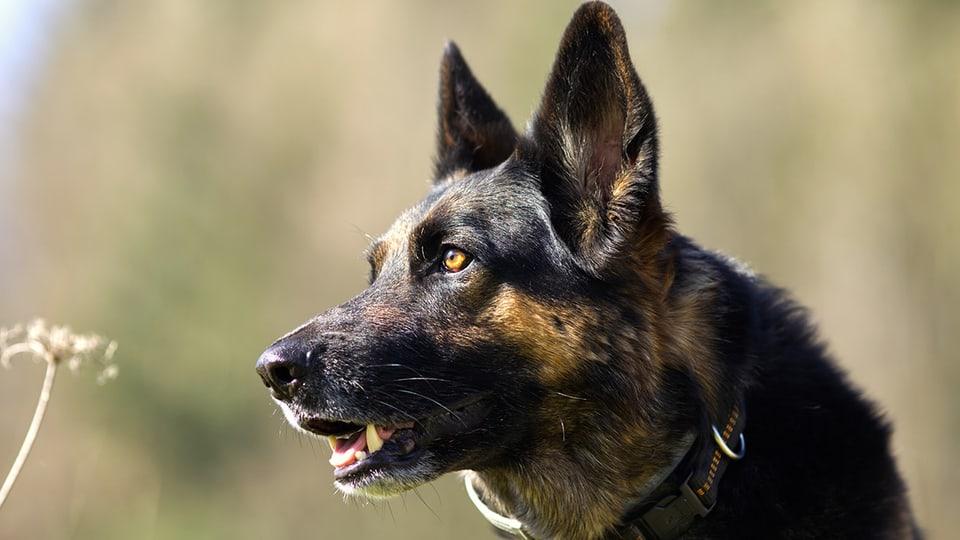 Hunde können mehr als nur bellen, um sich mitzuteilen.