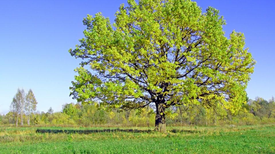 Bäume wie die Eiche waren häufig namensgebend für Familien.