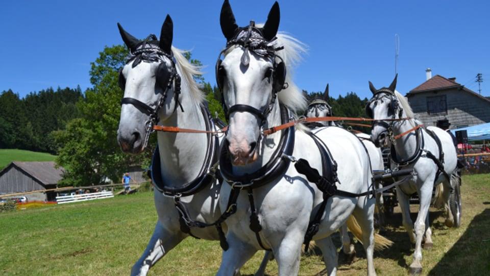 «Zuederhänder und Vonderhänder» hat mit der Position der angespannten Pferde zu tun.