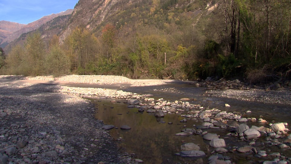 Ein revitalisierter Flusslauf im Tessin.