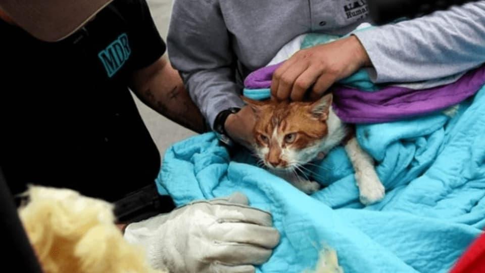 Mulestar animals per blers clicks – indizis per tals videos