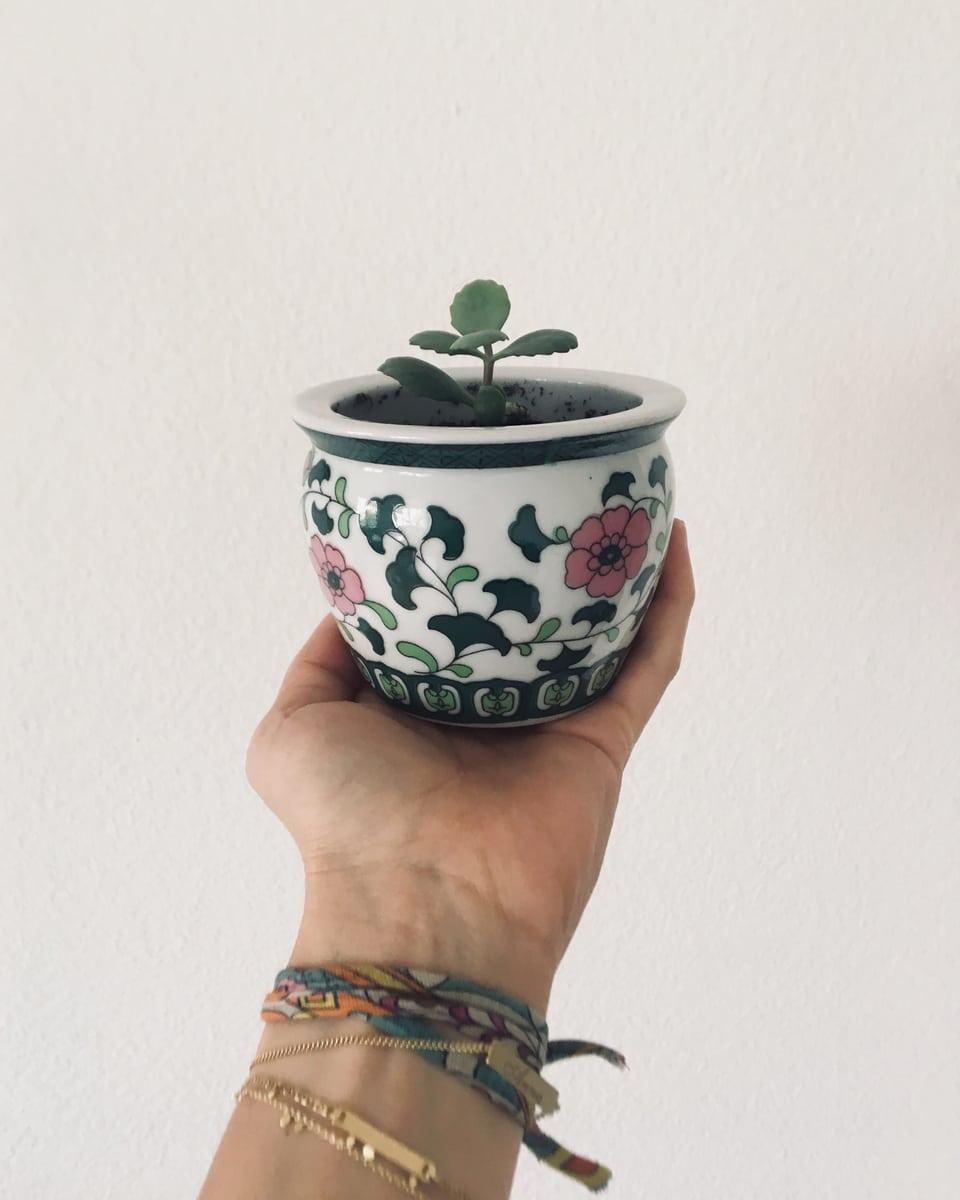 Töpfchen mit kleiner Pflanze