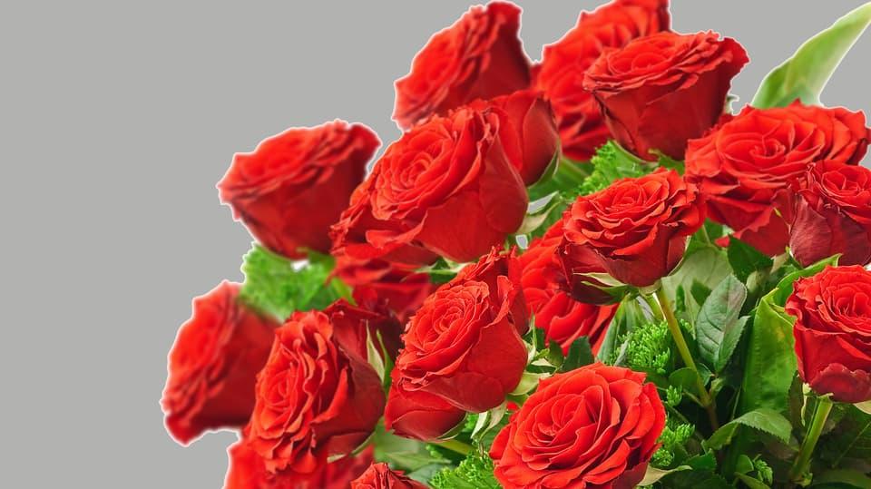 Wie viel kostet eine rose im blumenladen