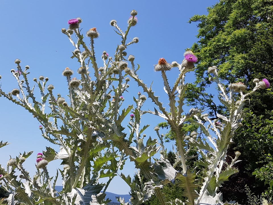 Blüten vor blauem Himmel