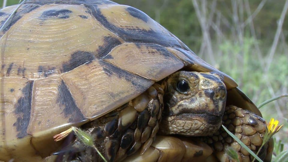 Schildkröte wandert über Felsen mit Aussicht