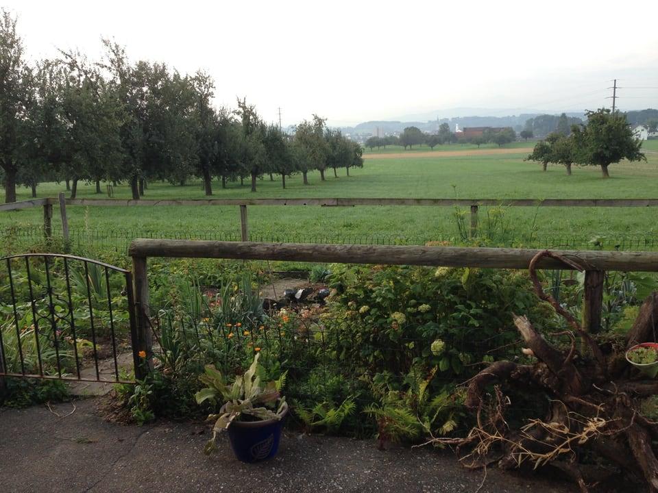 Hochstammbäume mit Mostäpfeln.