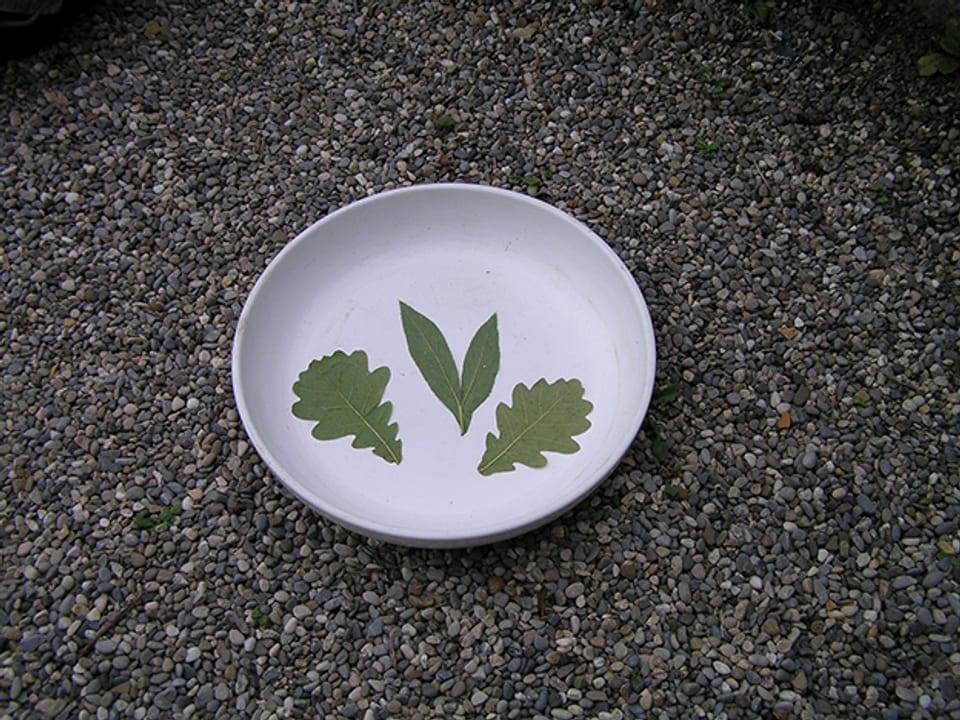 Blätter in der Schale.