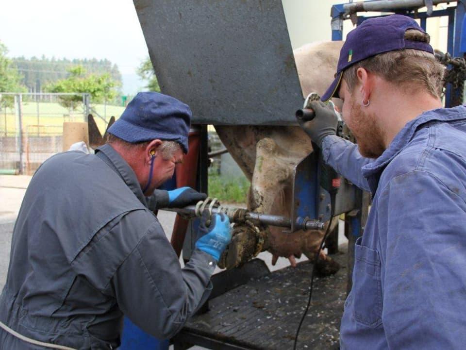 Der Klauenpfleger bearbeitet die Klaue einer Kuh, während der Bauer an seiner Seite steht.