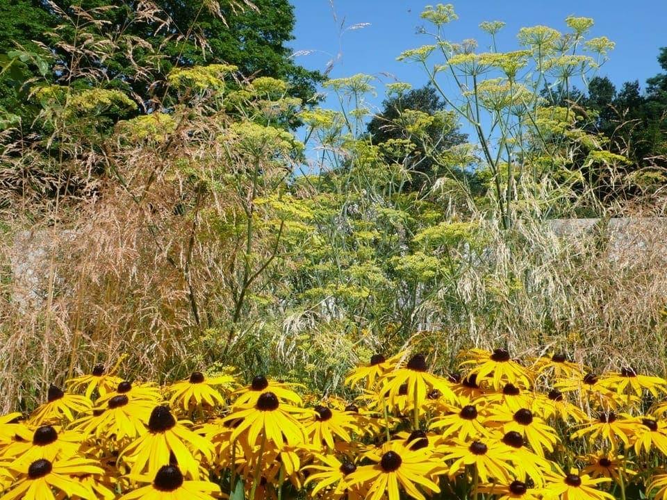 Gelbe Blumen umrahmt von Gräsern,.