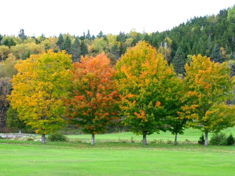 Bäume in Herbstfarben.