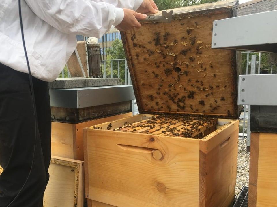 Willkommen im Bienenstock