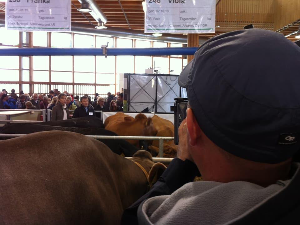 Moderatorin und Kameramann bei der Arbeit inmitten von Kühen.