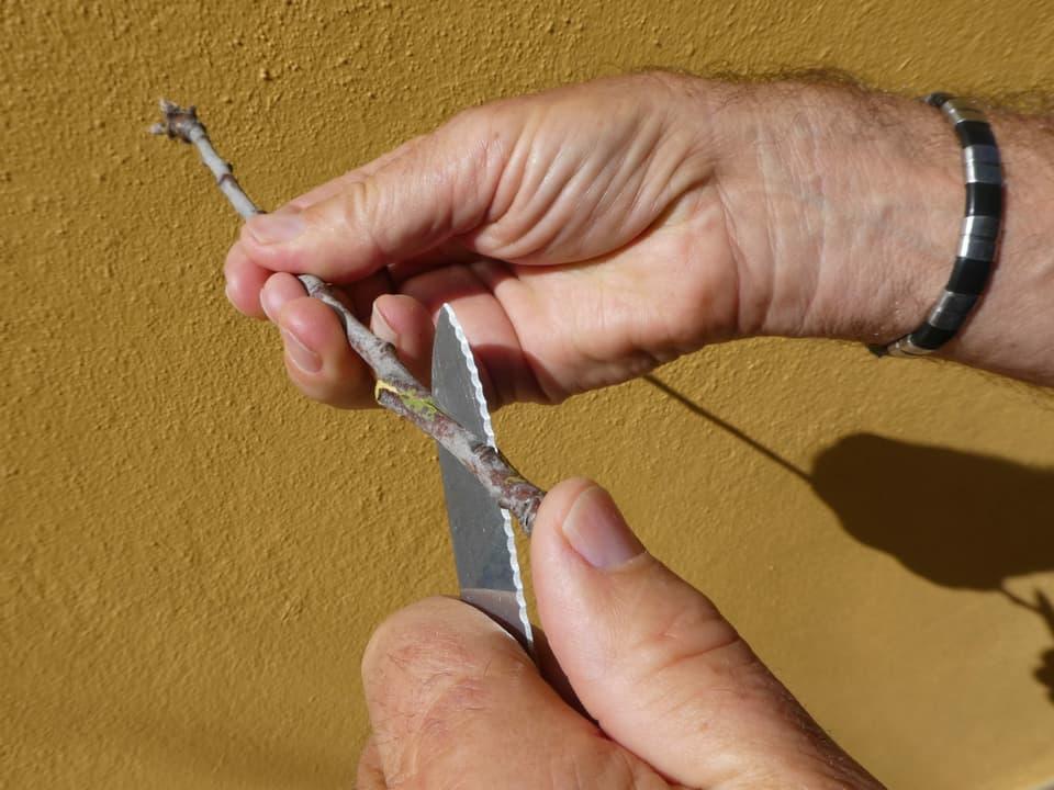 Der Zweig wird mit einem Messer schräg angeschnitten.