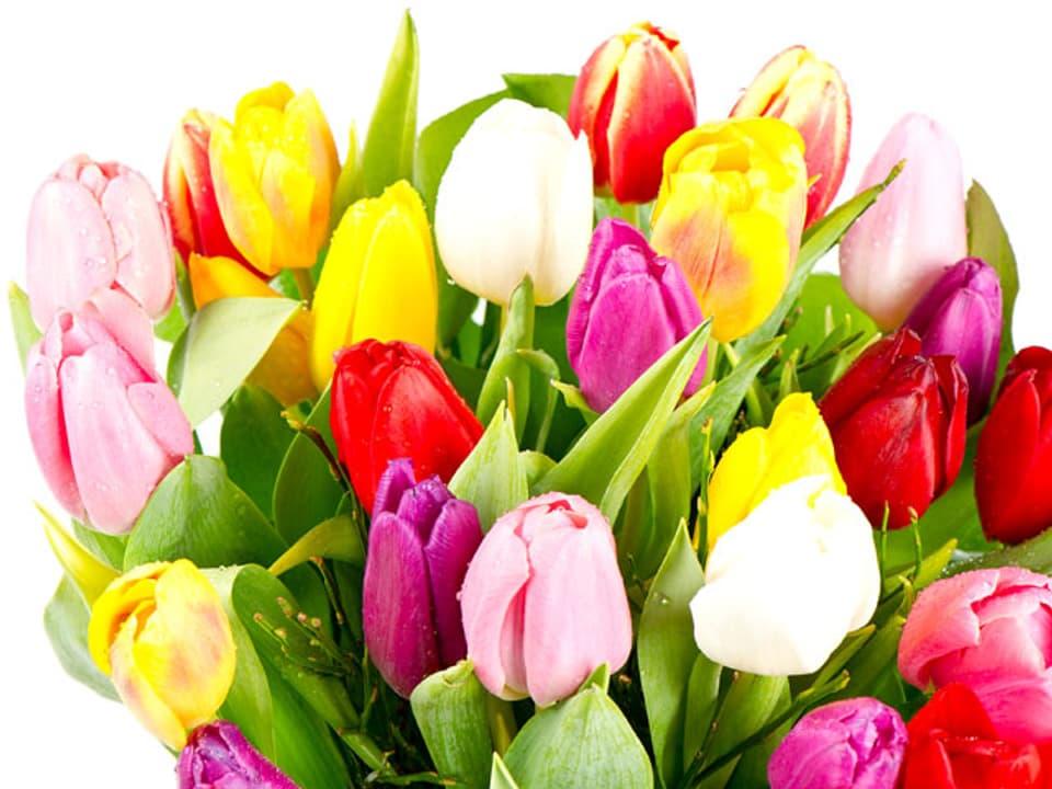 Bunter Strauss mit Tulpen