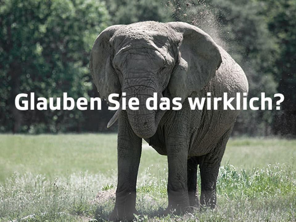 Elefant läuft auf Gras.
