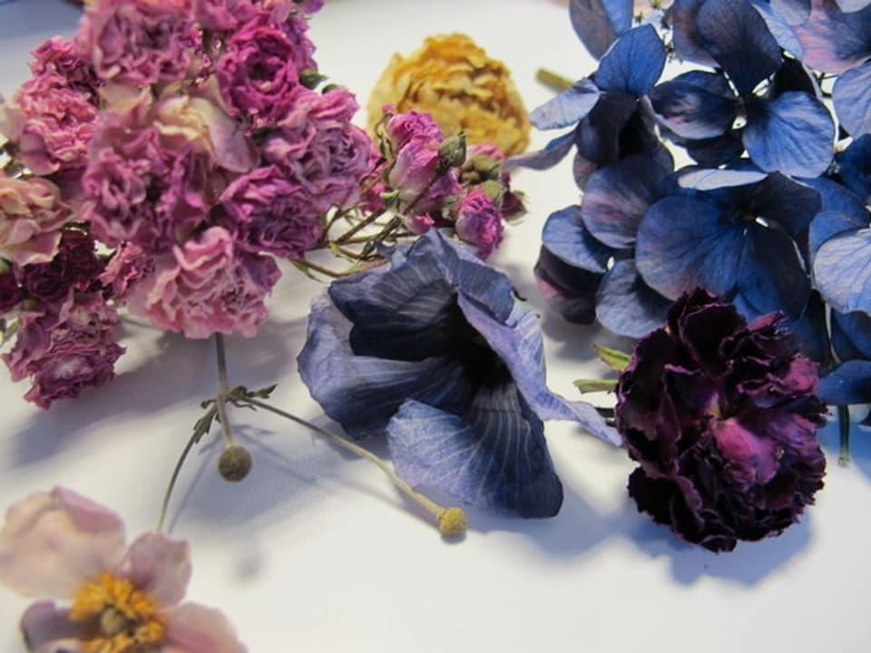 Getrocknete Blumen.