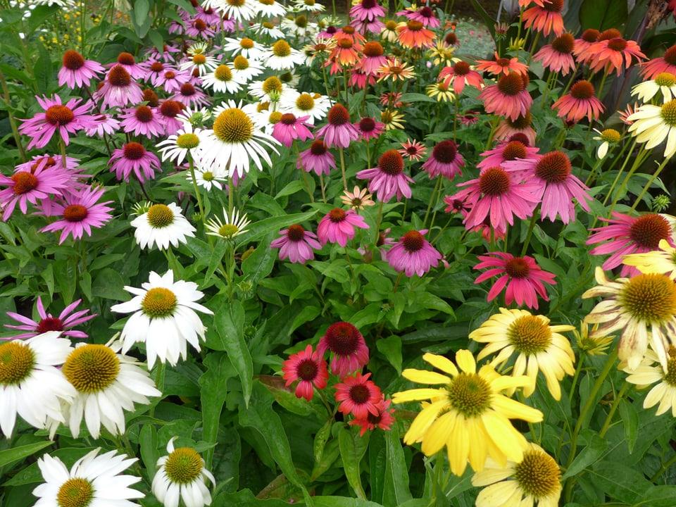 Wiese voller farbiger Blumen