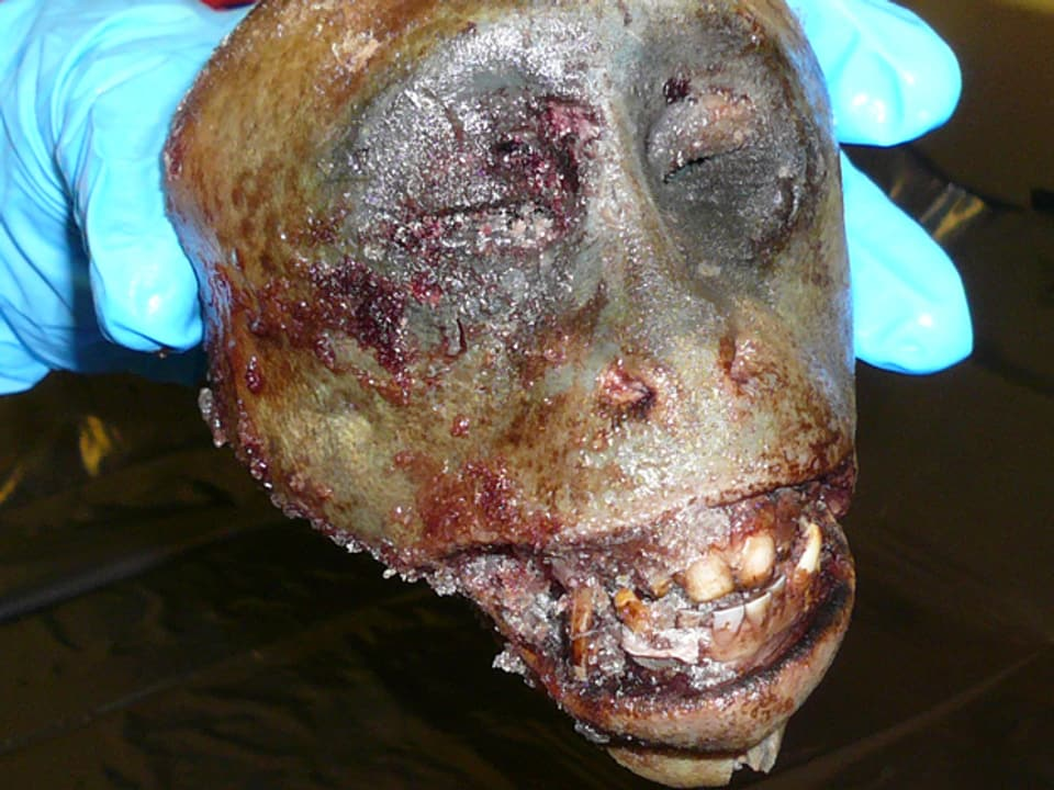 Für den Schmuggeltarnsport wurde dieser Affe notdürftig geräuchert, damit das Fell weg ist. Hygienebedingungen - katastrophal!