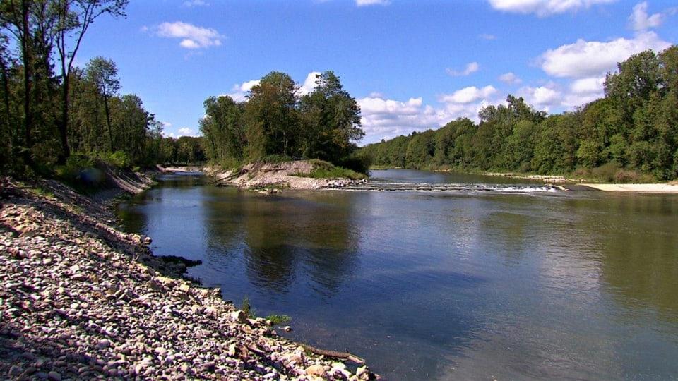 Naturschutz: Mehr Natur entlang den Flüssen soll die Menschen vor Hochwassern schützen. (Die Aare - befreit von ihrem Korsett - teilt sich in zwei Arme)