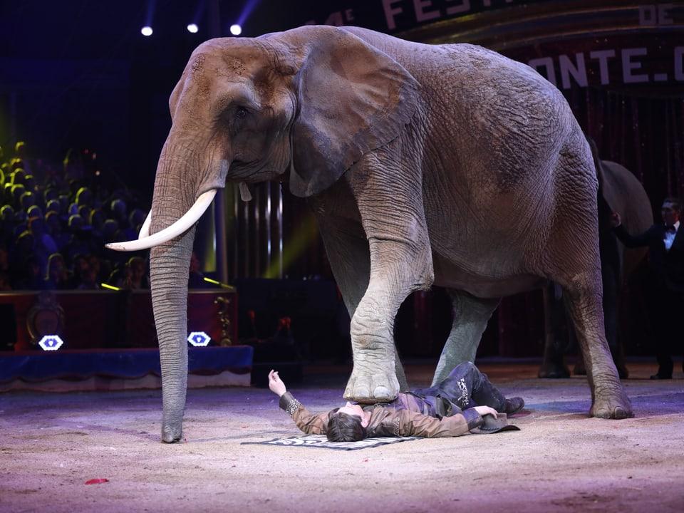 Dompteur liegt unter einem Elefantenfuss.