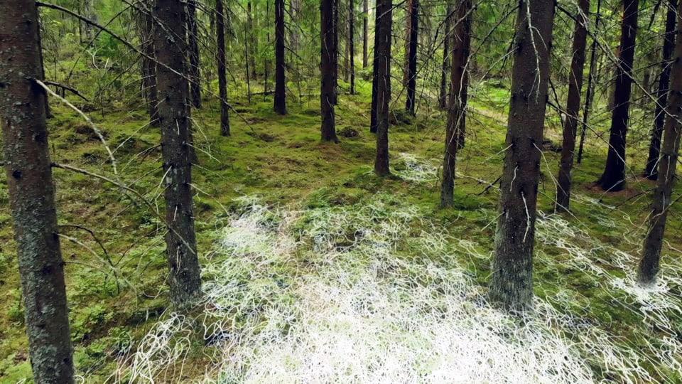 Mycelfäden grafisch gezeichnet auf Waldboden