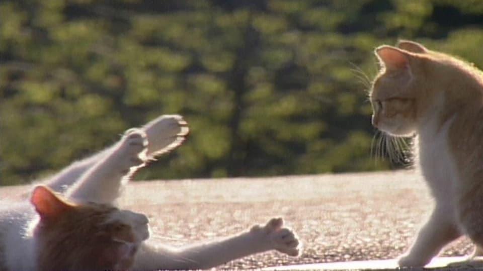 Meister des Spiels: Von Jung bis Alt spielen Katzen ein Leben lang. (eine Katze liegt seitlich am Boden und streckt die Pfötchen zum Spiel)
