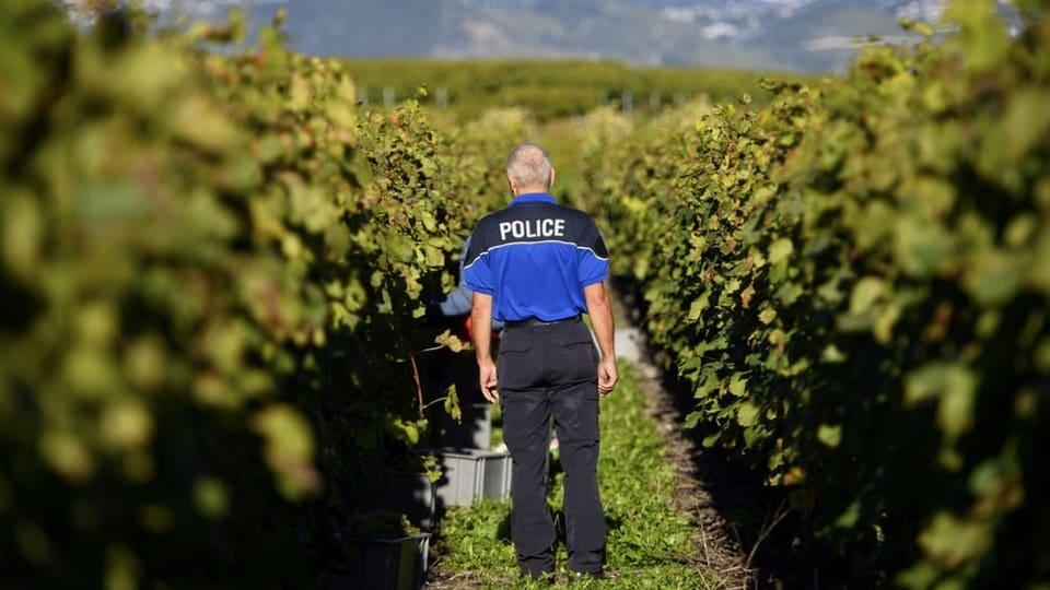 La polizia sto proteger vignas en il Vallais