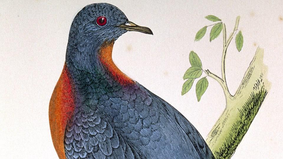 Ein Wissenschaftler will ausgestorbene Arten wiederbeleben