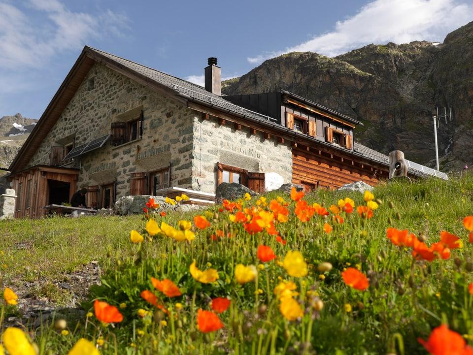 Gelbe und orange Blumen vor der Jenatschhütte.