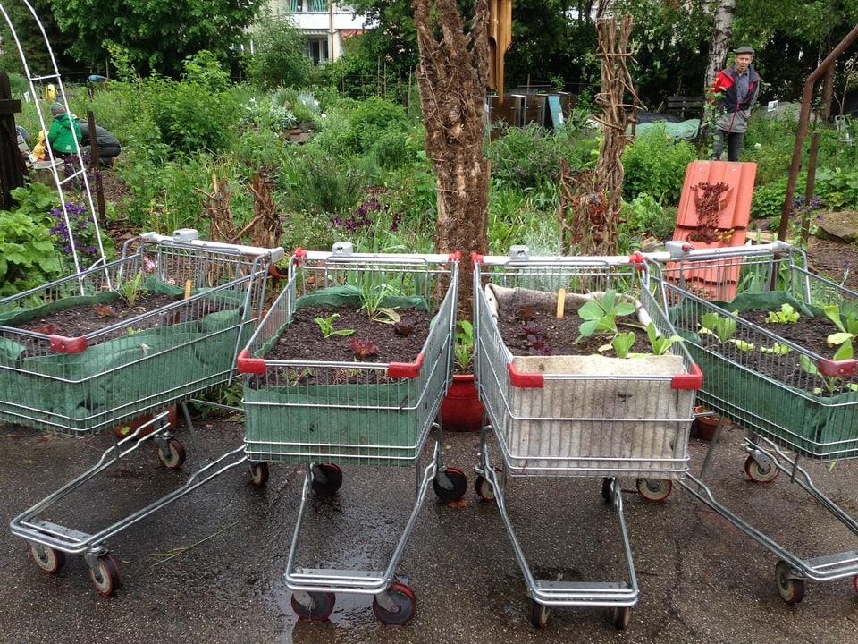 Pflanzen in ausrangierten Einkaufswagen.