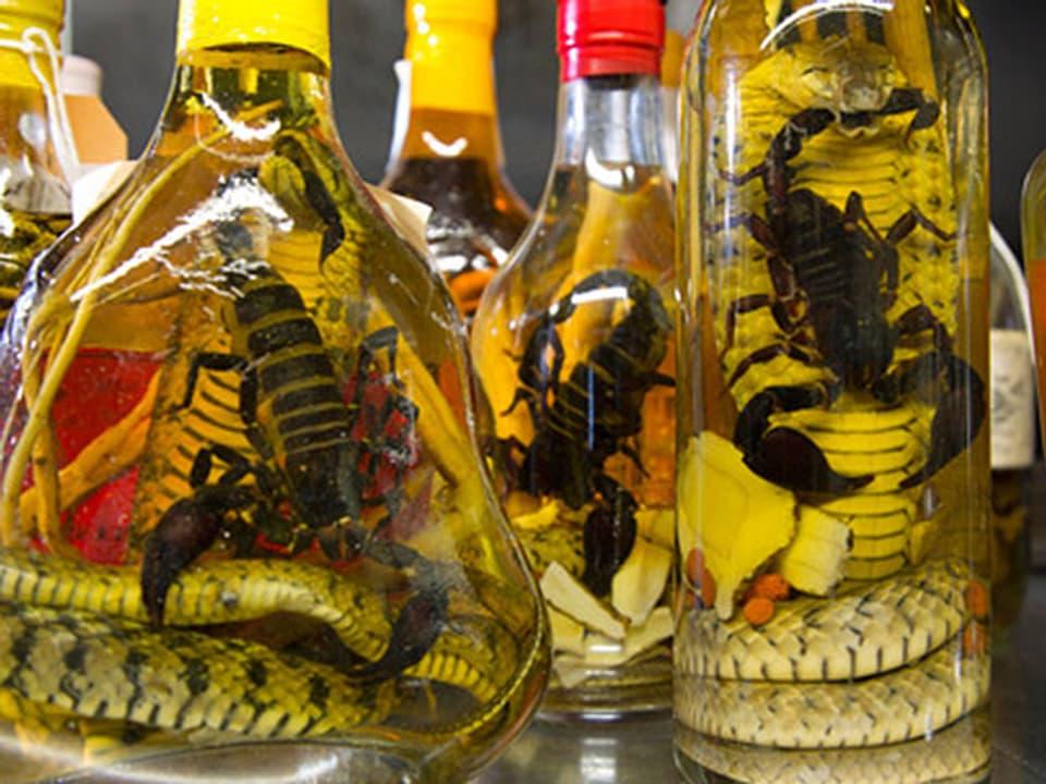In Flaschen eingelegte Skorpione und Schlangen.