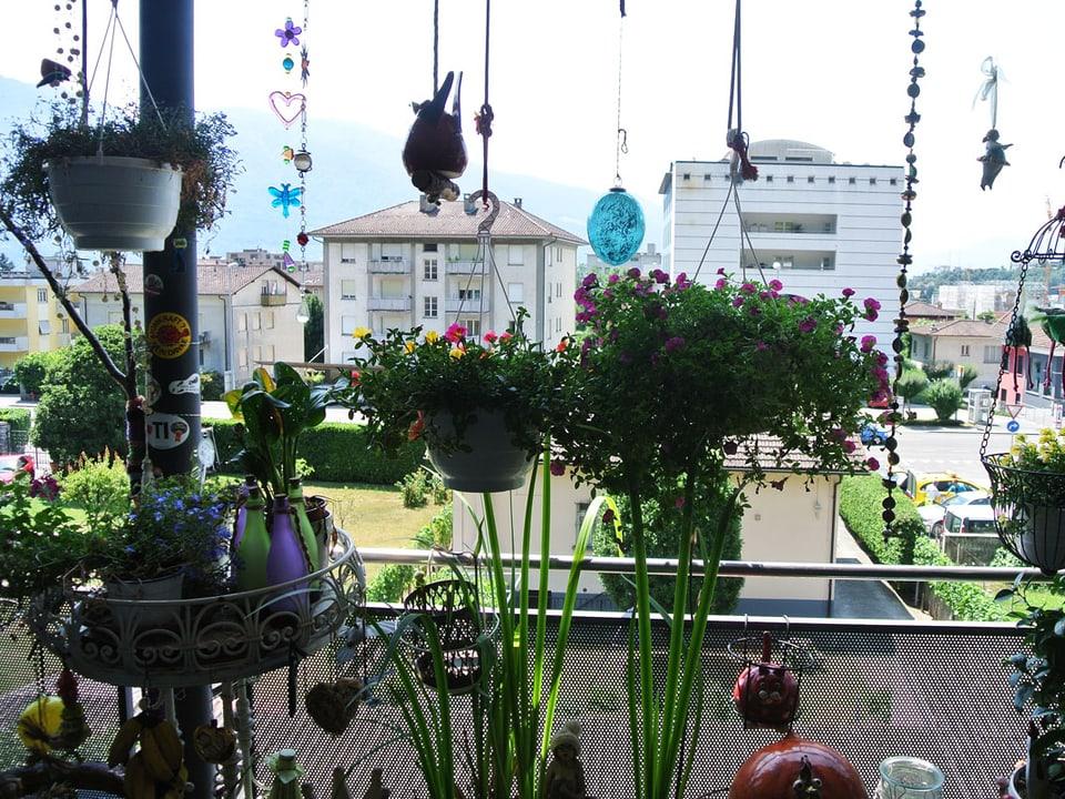 Blick vom Balkon durch viele Pflanzen hindurch Richtung Häuser.