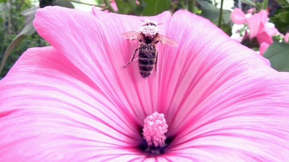 Weniger Blumenwiesen, weniger Nektar, weniger Bienen.