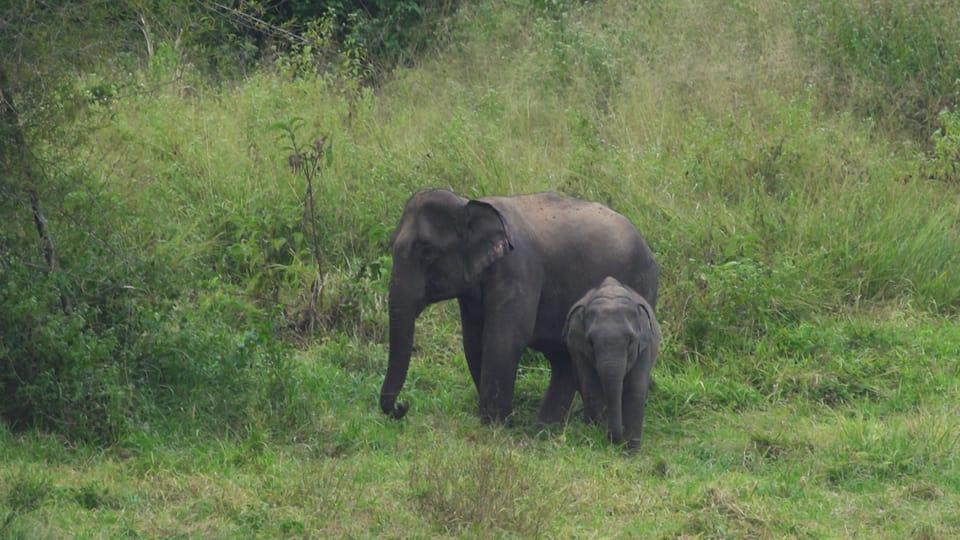 Junger wild lebender Elefant steht vor seiner Mutter und schaut in die Kamera