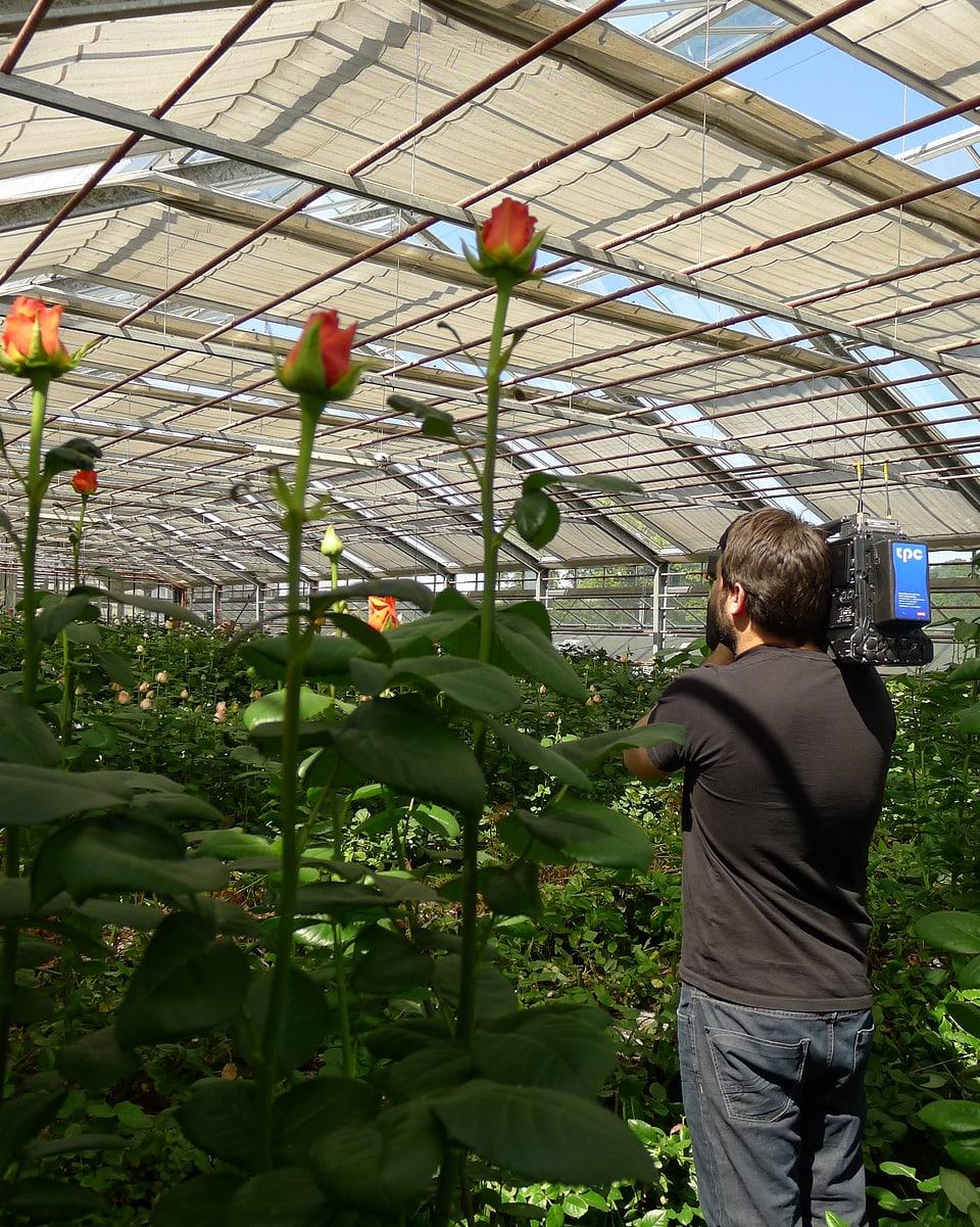 Im Gewächshaus steht Ueli Haberstich mit geschulterter Kamera neben Rosen, die grösser erscheinen als er.