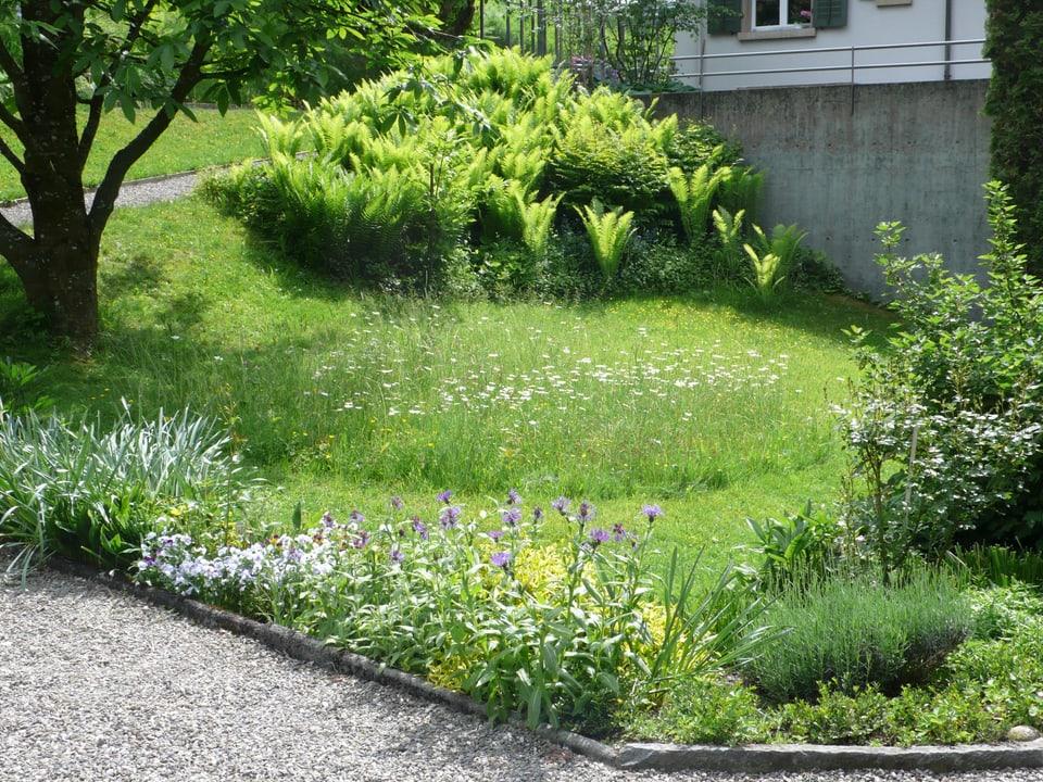 grüne Wiese, im Hintergrund Farn