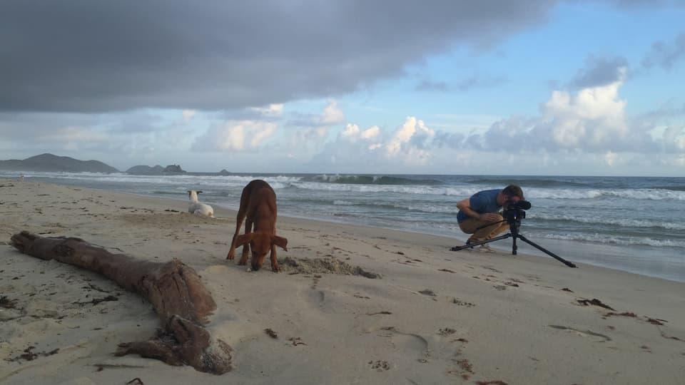 Morgenidylle: Kameramann Sergio Cassini muss die Playa El Agua nur mit Strandhunden teilen.