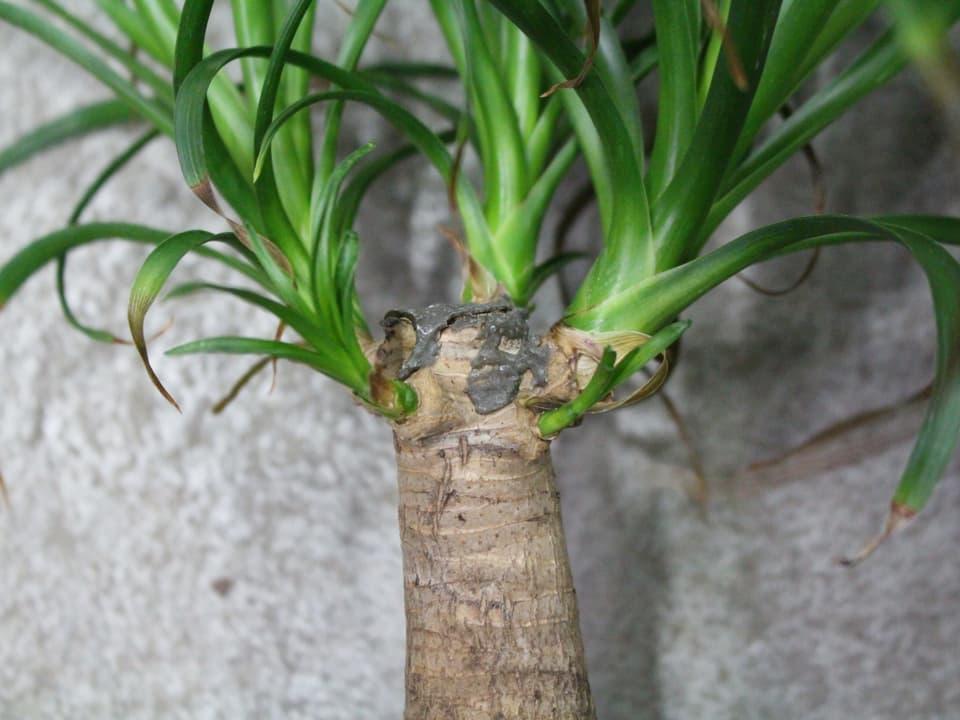 spriessige Pflanze
