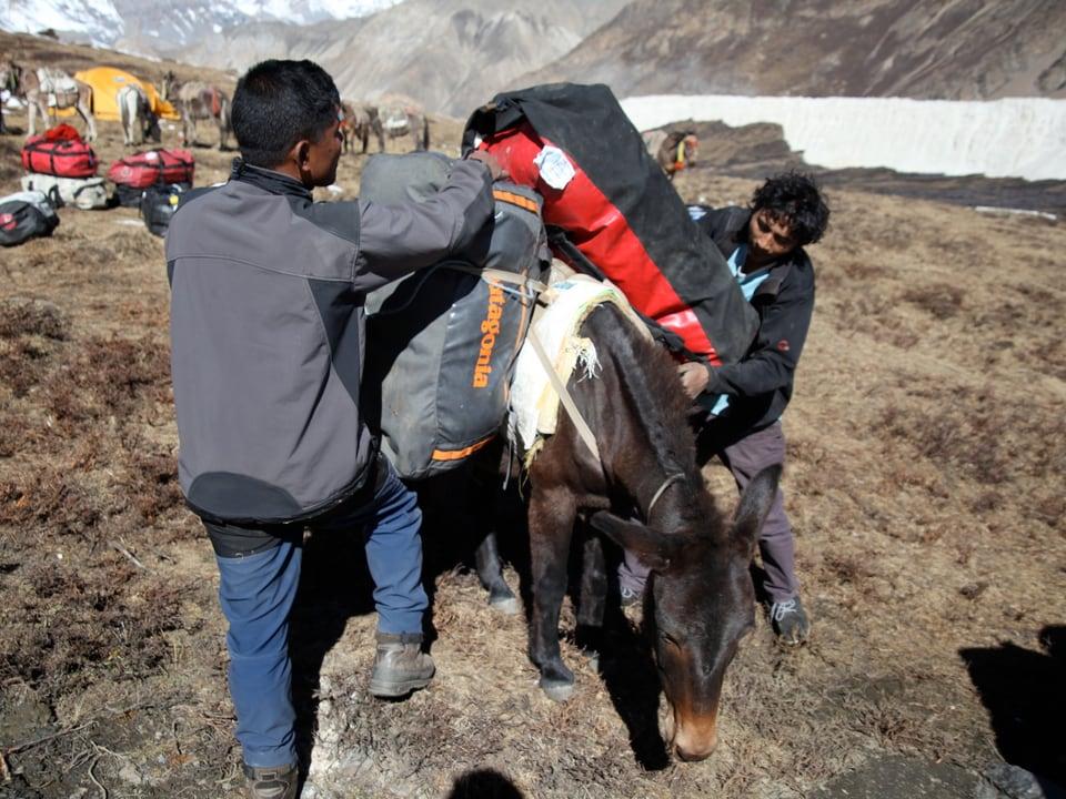 Sherpas bepacken Maulesen.