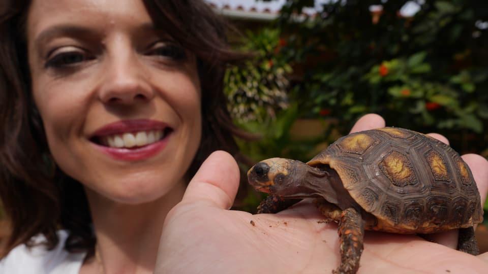 ...diese kleine Schildkröte wurde sogar im Garten der Auswanderer geboren.