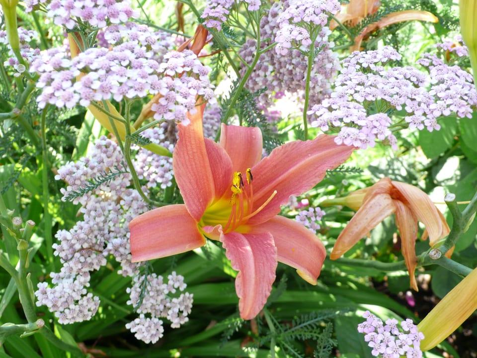 rosarote Blume vor Grünem