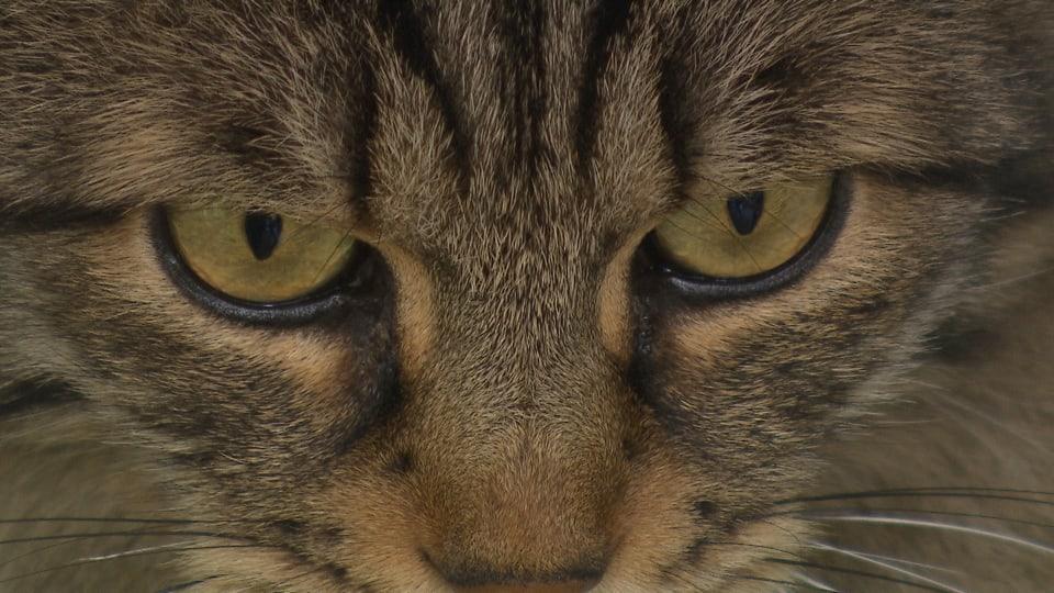 Katzenfutter im Test: Zu viele unerwünschte Stoffe im Napf
