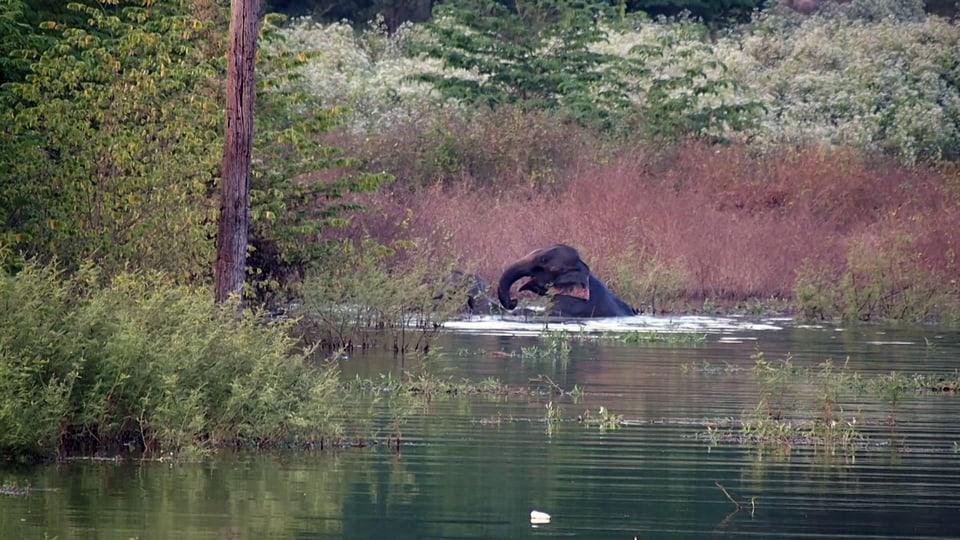 Junger Elefant reitet in der Wildnis im Wasser auf