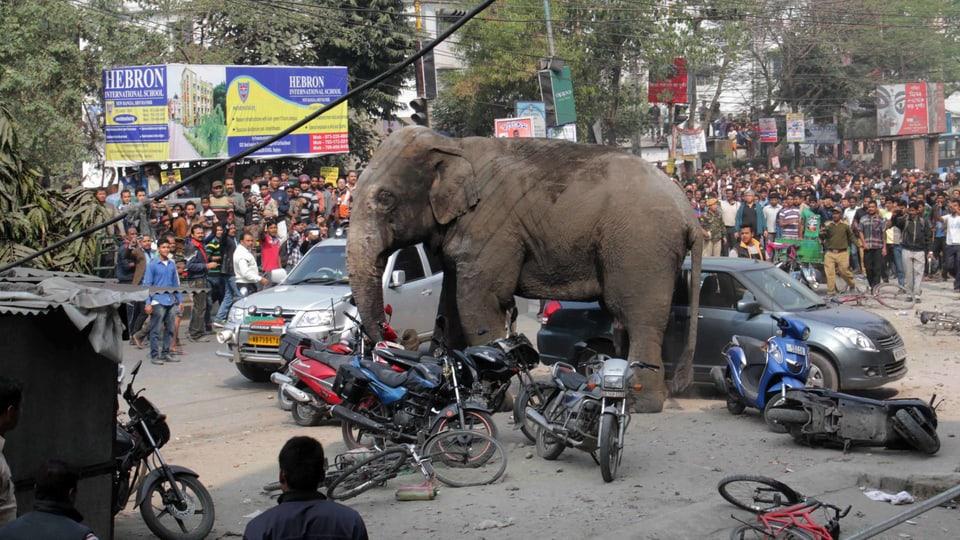 Elefant steht inmitten des Verkehrs mit vielen Zuschauern